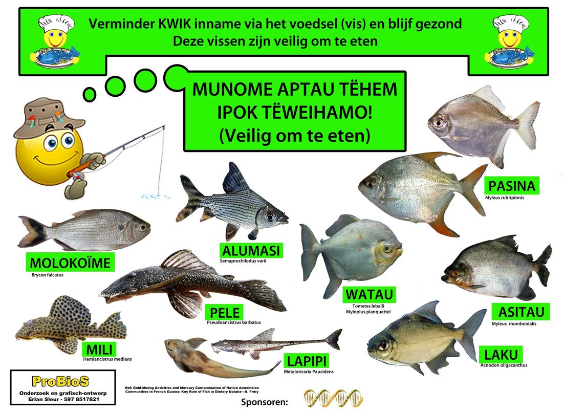 Herbivore vissen