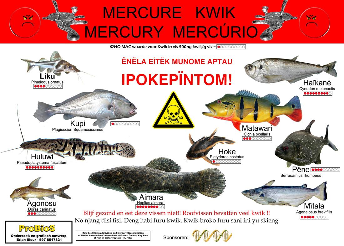 Roofvissen met kwik4