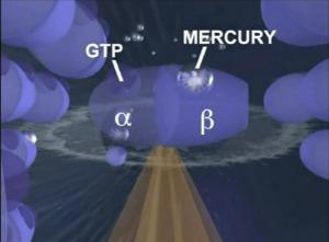 Univ Calgary-mercury brain damage.mp4
