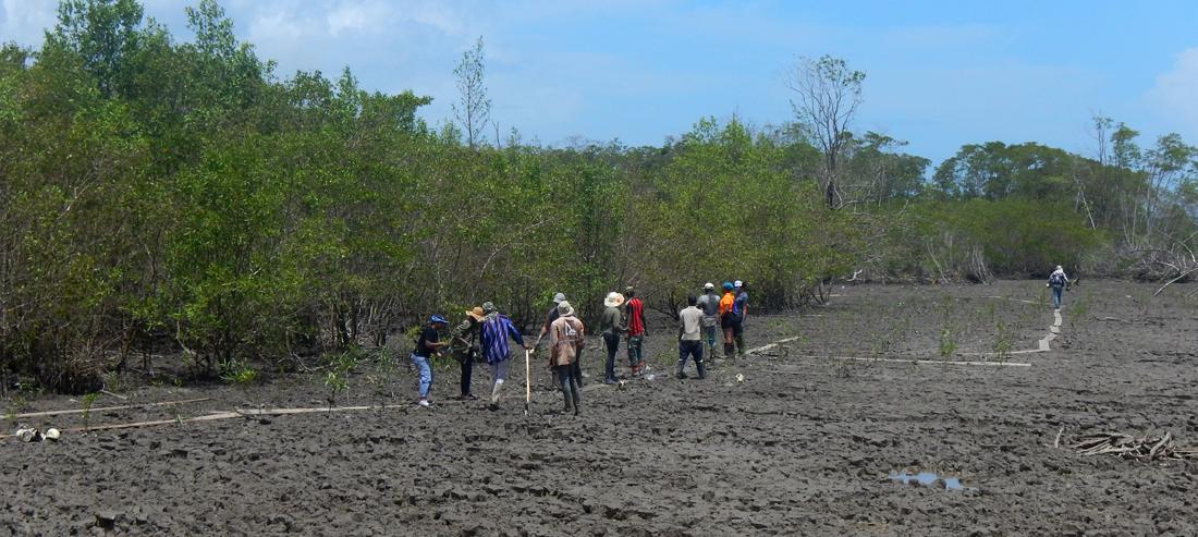 mangrove planten