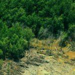 Kustafslag en ontwortelen bomen (1)